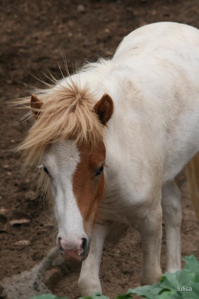 Dirty Pony by lulisa