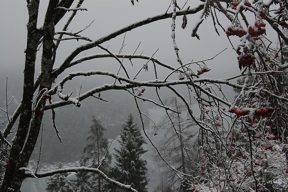 frozen in time by n8182253