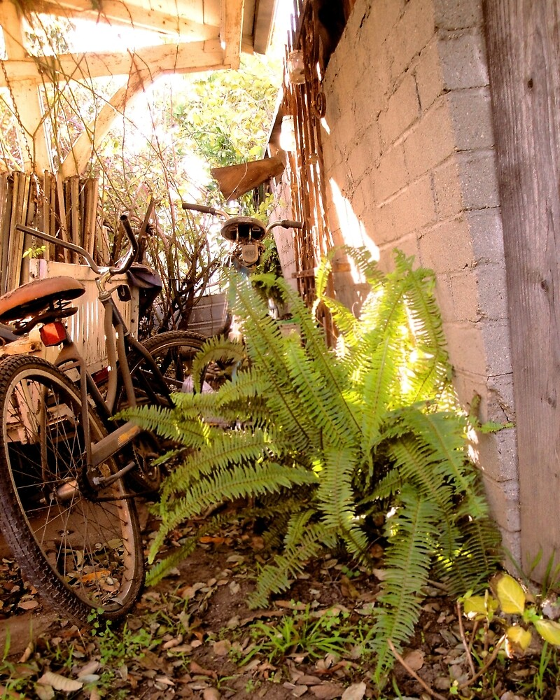 Bike Lane in the Light by Ben Geiger