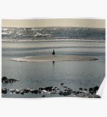 Seagull Looking out to Sea Poster