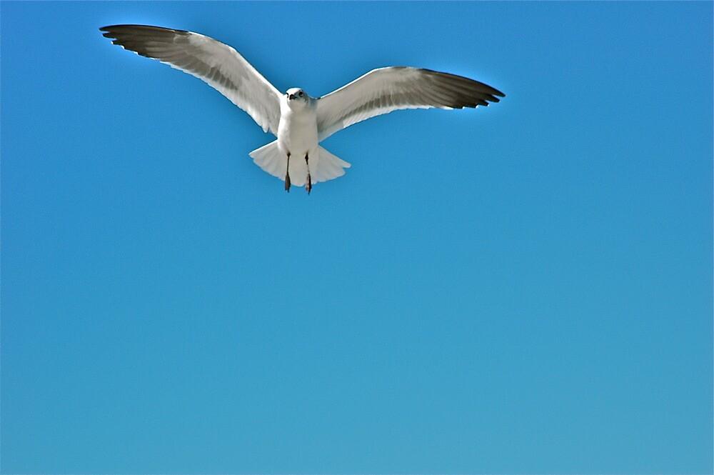 Flight by Ainsley Kellar Creations
