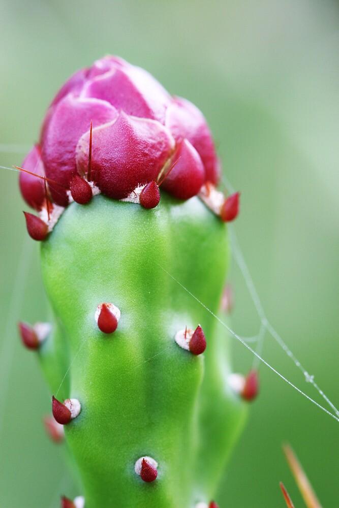 Cactus flower by eduardoaffonso