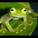Kermit! by MyFrogCroaked