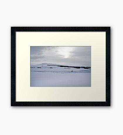 Winter Beauty II Framed Print