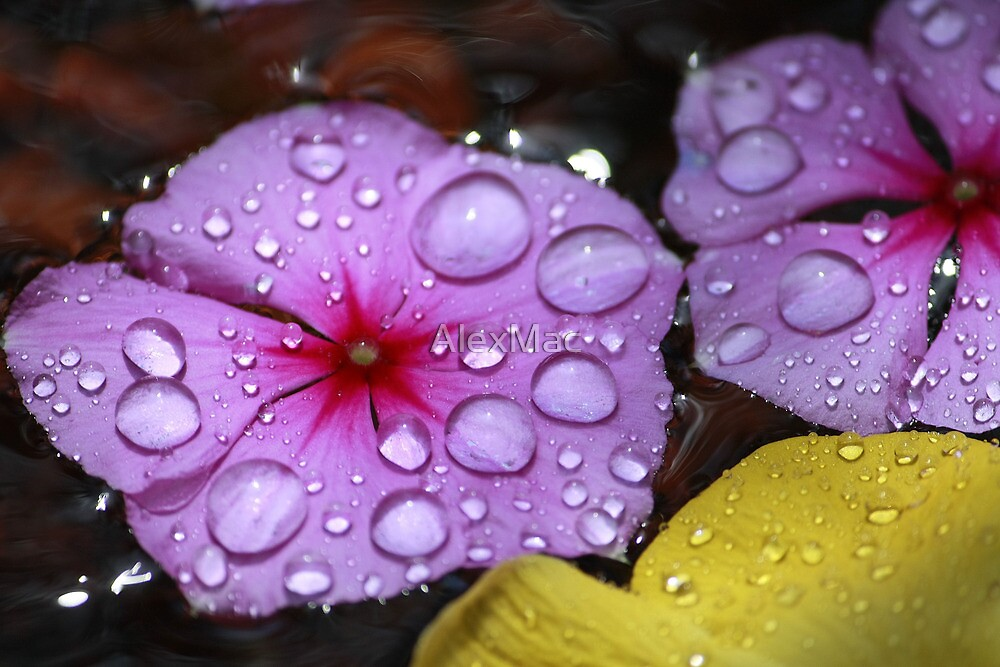 Water Drops by AlexMac