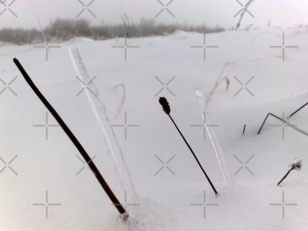 ice on twig - garnyrerw by sjbaldwin