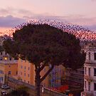 "Birds hotel in Rome by Antonello Incagnone ""incant"""