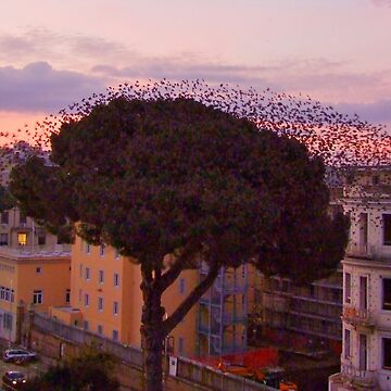 Birds hotel in Rome by incant