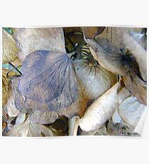 Tissue Paper Petals Poster