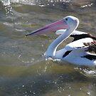 Don't get me wings wet! by Graham Mewburn