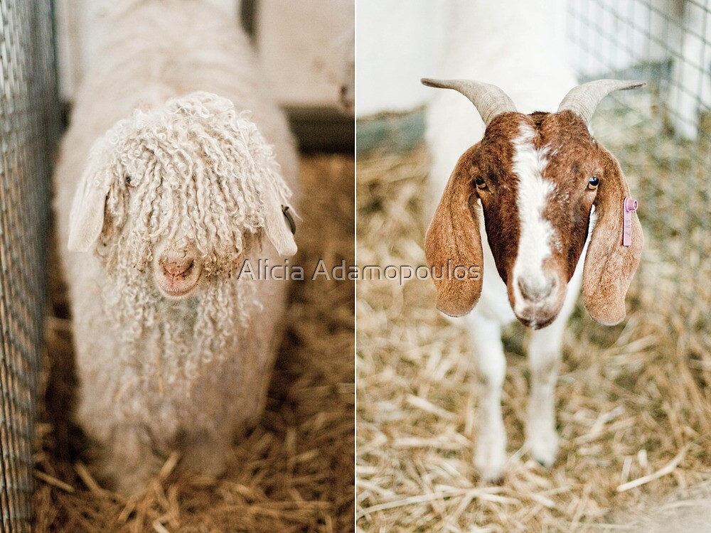 Two Goats by Alicia Adamopoulos