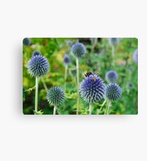 The Buzz in the Garden Blue Globe Flowers Canvas Print