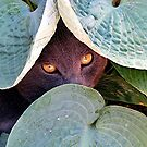 Eye Spy by © Loree McComb
