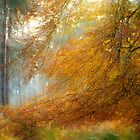 Beech Tree on Cannock Chase by Ann Garrett