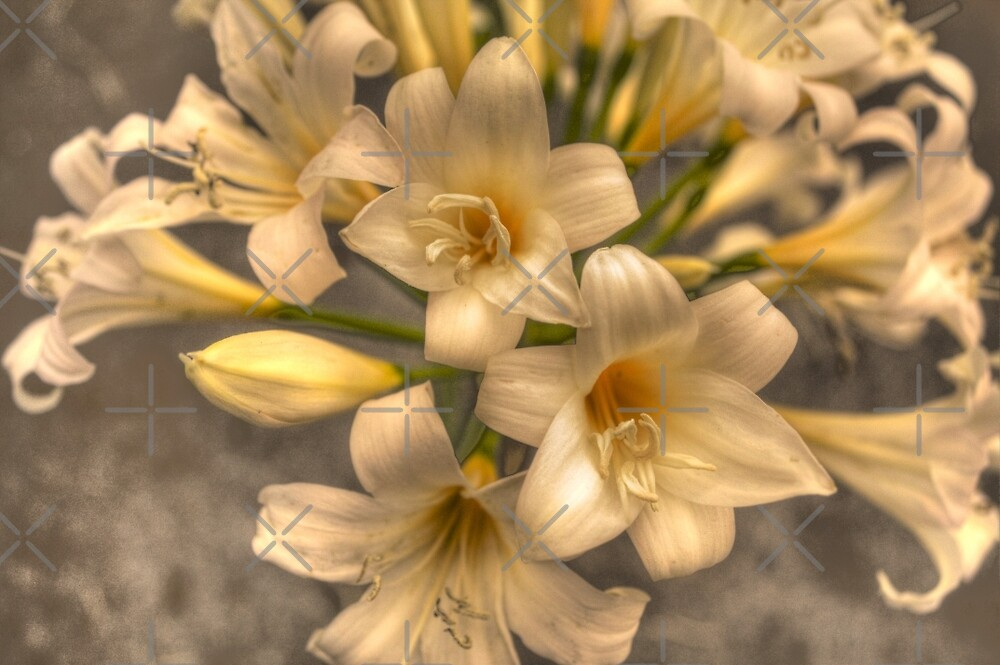 Easter Lily by Elaine Teague