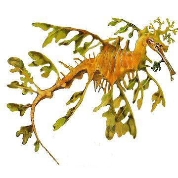 Leafy Seadragon  by salamandaz