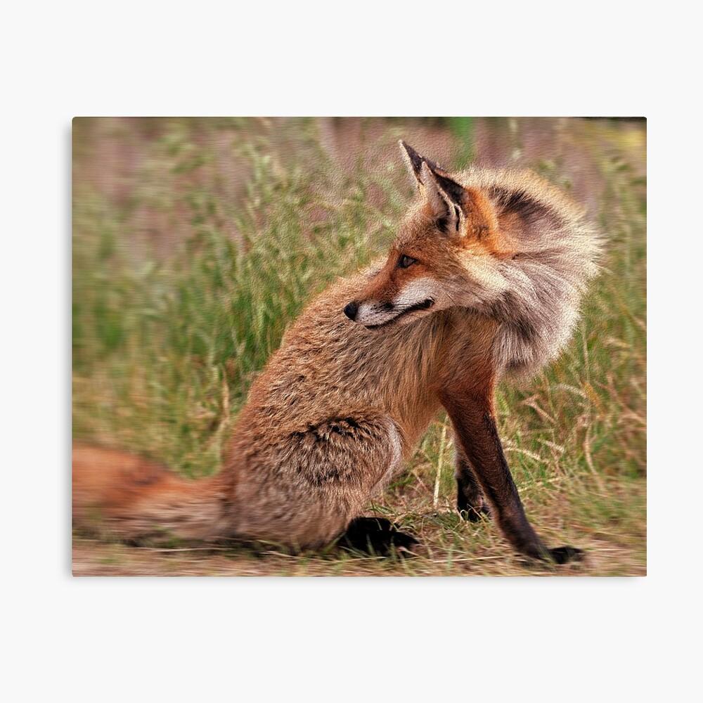 Red Fox Mom  Canvas Print