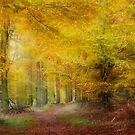 Autumn Abstract by Ann Garrett