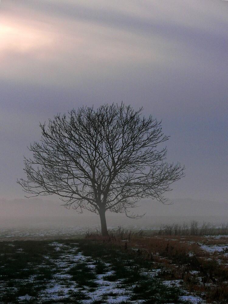 Misty Evening by Carol Dawes