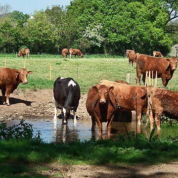 Curious Cows by lynn45