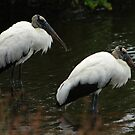 Wood Storks by Virginia N. Fred
