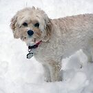 Waiting For A Snowball by Monica M. Scanlan