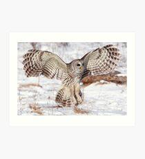 Feather-Fan Art Print