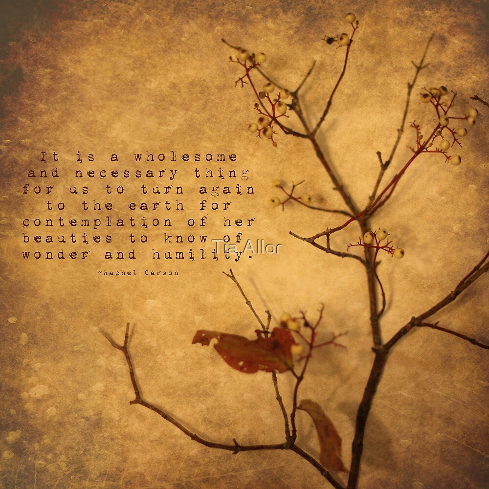 Contemplation by Tia Bailey