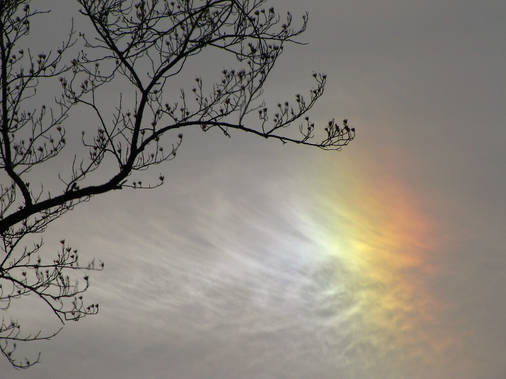Sun Dog-Final Stage by Pamela Phelps