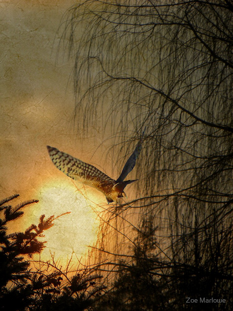 Flying To The Sunset by Zoe Marlowe