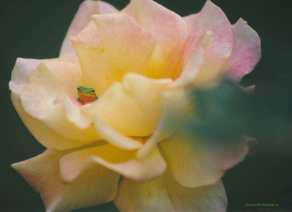 rosefrog by RicoR8Art