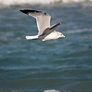 Seagull Fly By by Donna Adamski