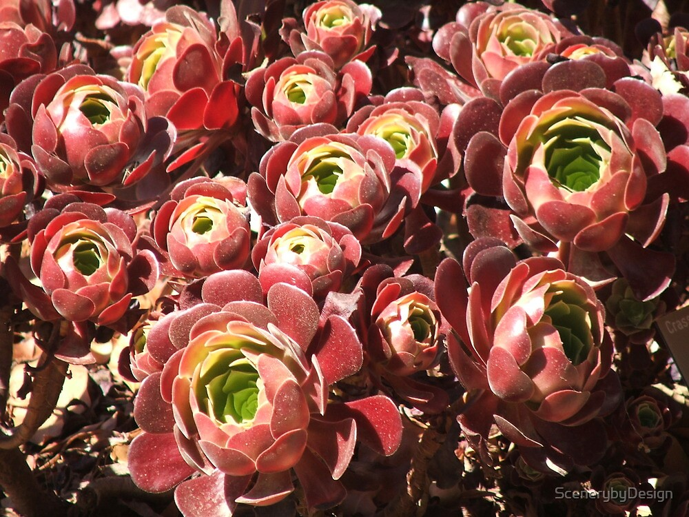 Succulent (4229) by ScenerybyDesign