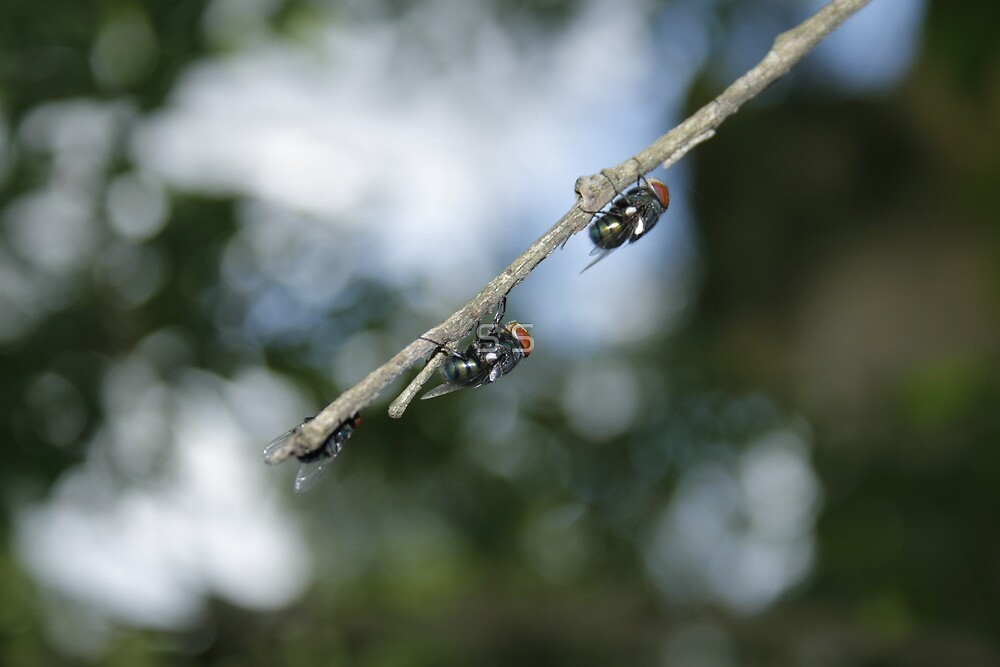 Flys on the End of a Branch by S S