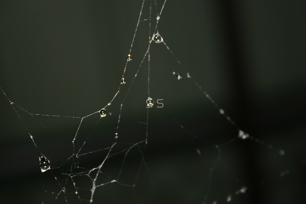 Water on the Web by S S