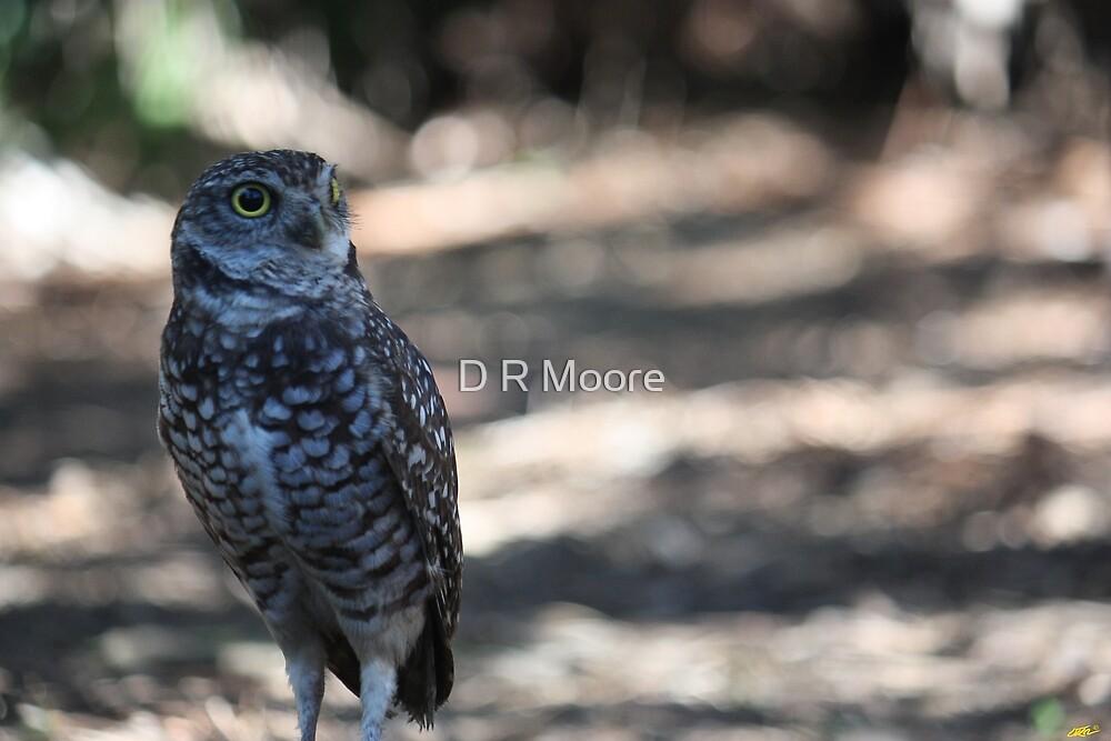 Burrowing Owl by D R Moore