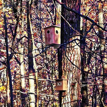 Two Birdhouses in the Autumn Woods by SudaP0408