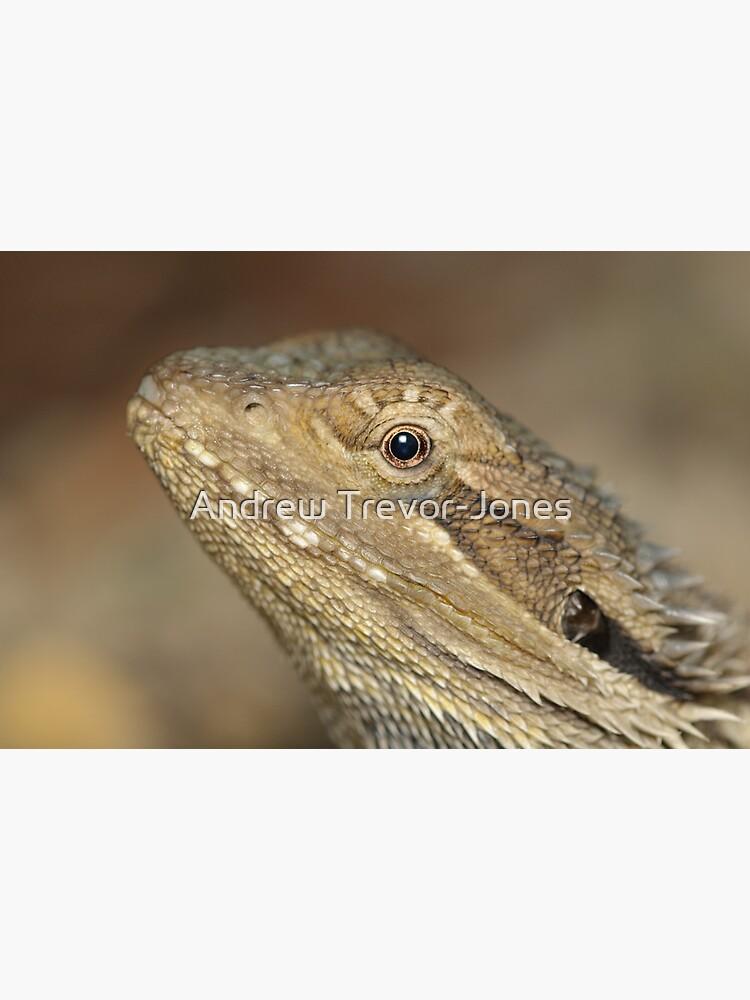 Eastern Bearded Dragon by andrewtj