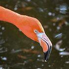 Flamingo Face by Bob Hardy
