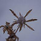 Grown in snow by BrittArnhild