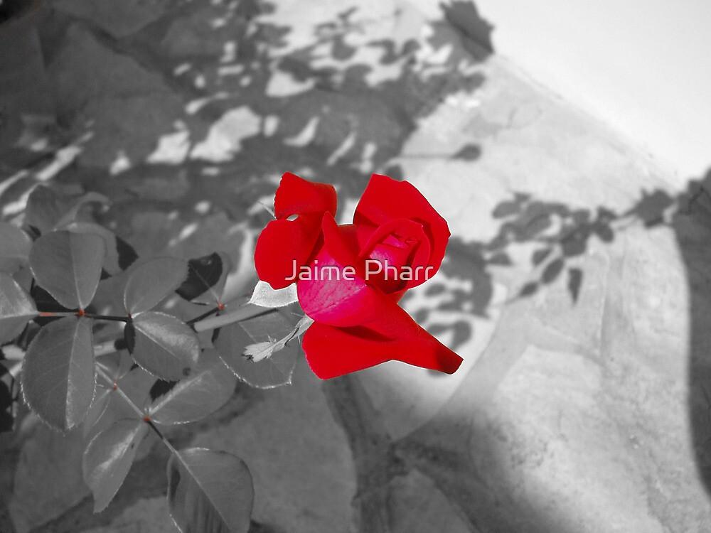 Red rose by Jaime Pharr