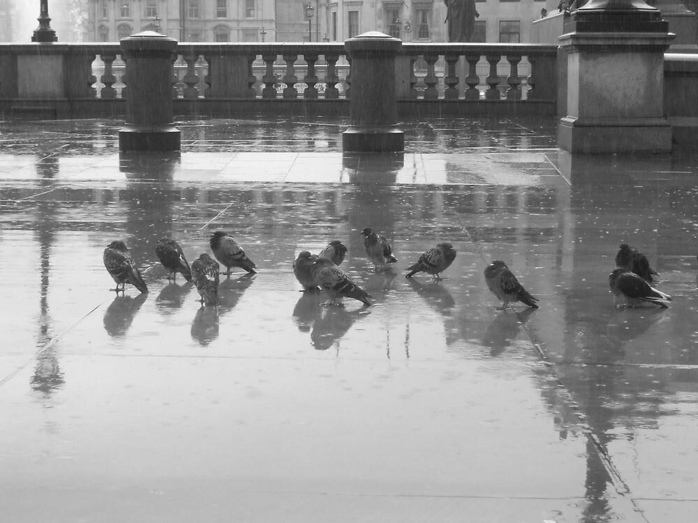 wet pigeons - london by kenkrash