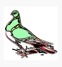 Glow Bird Photographic Print