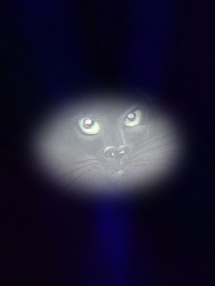 "Cat ""Spirit"" Eyes by Sarah Russell"
