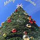Hobart Christmas Tree by Mark Higgins