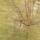 Wood by Sancreoto