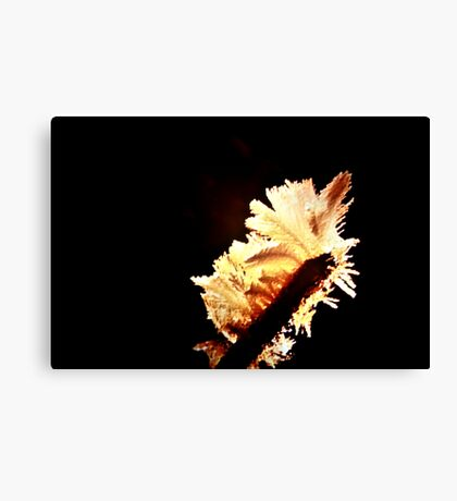 In Light Canvas Print