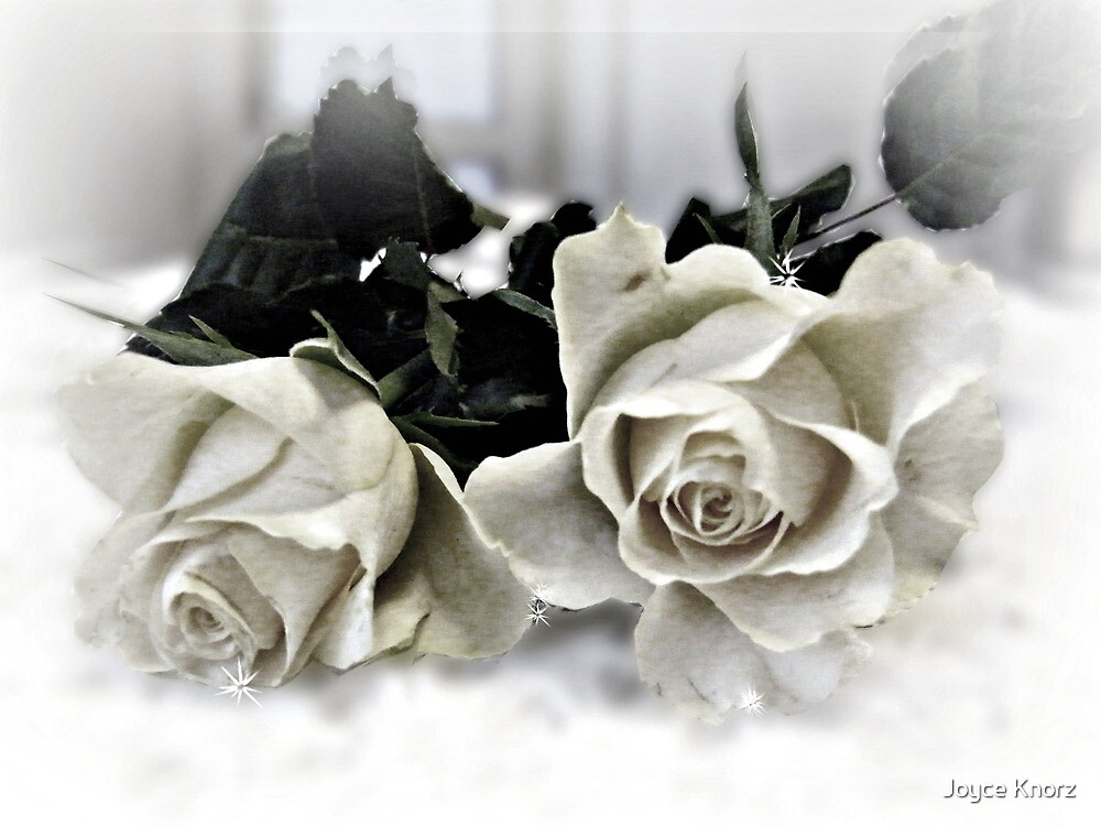 old roses by Joyce Knorz