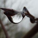 Twiglet drop by ToasTee