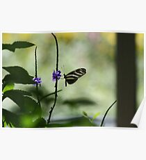Butterfly in The Pavilion Poster